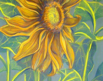 Sunflower Power