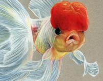 Grumpy Goldfish