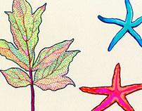 Starfish & Leaf