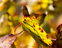 Close-Up: Leaf