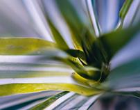 Posibilidades del Verde