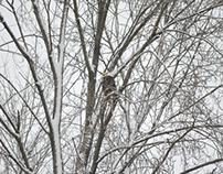 Eagles - Snowy Day - N.Van