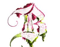 B is for Bouganvillea