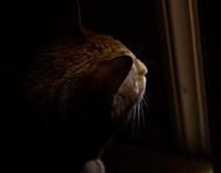Focusing on Light