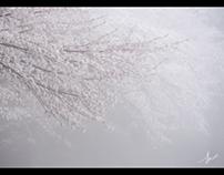 霧(Fog)