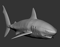 big white shark