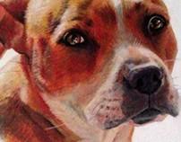 Dog commission 2013
