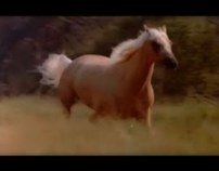 THE SILVER STALLION: ANSIAS DE LIBERTAD  (VIDEO NOTA)