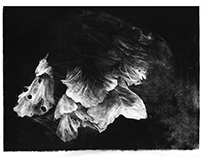Rothadó Virág / Rotting Flower