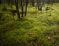 Wood & Moss