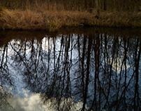 Peat Lands & Black Water