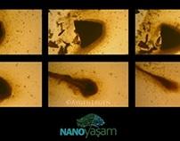 Bioactive Antioxidants Video Project II, February 2014