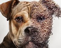 Wormy Dog