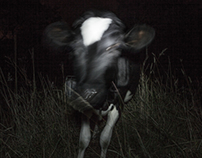 Cows in the dark/ Vacas en la oscuridad