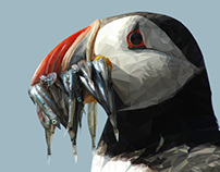 Scottish Birds-Puffin