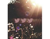 Twitter Skin, Homepage