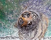 Shake it Tiger.