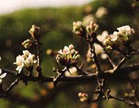 La rinascita della Primavera.