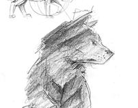 The Wolves of Boekenhoutskloof