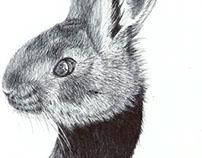 Animales: Cazadores y presas.