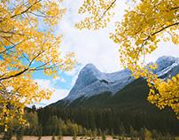 Fall in Alberta
