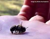Dead Bees: Ban Neonics