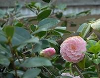 Japan Spring (201403~04)
