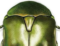 Scarabé vert