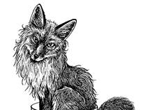 Foxy T(ea)