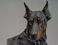 """""""Dog Portraits"""""""