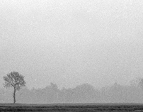 Haze and trees