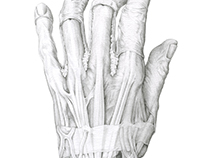 Hand Dissection (drawn and dissected by me)