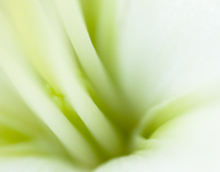 Nature Closeup 2