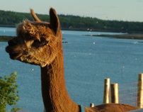 Eastport Alpaca - New Business Branding and Sales Mgr