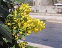 Spring Time in Niš