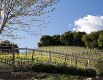 Vineyard & Residence