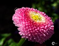 Macro - Flowers