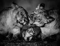 Baby wild animals / Bébés animaux
