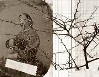 An Herbarium