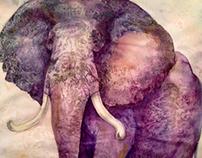 Big wrinkled elephant