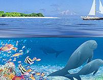 Great Barrier Reef Blog