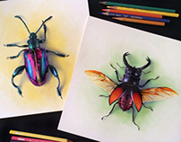 Beetle Studies, Colored Pencil