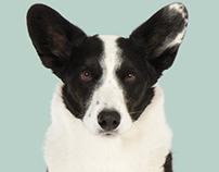 Projekt 100 Hunde (Project 100 Dogs)