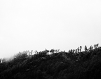 Monochrome Mist