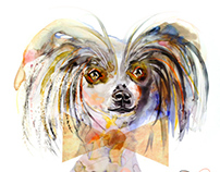 Dog Portrait for 1000 Dog Portraits book.