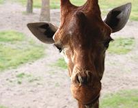 Giraffic Art