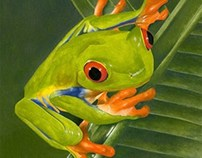 """Red Eyed Tree Frog"""