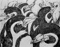 Animal drawings