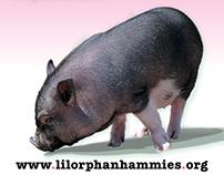 Lil' Orphan Hammies