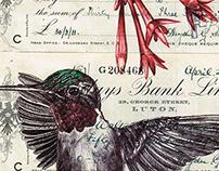 bic biro bird drawings